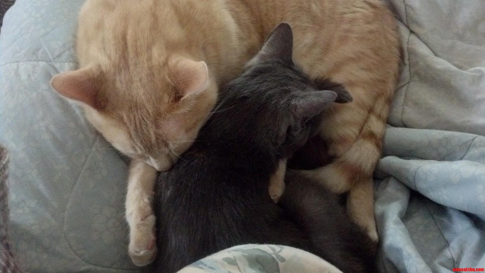 Kit Cuddling His Best Friend