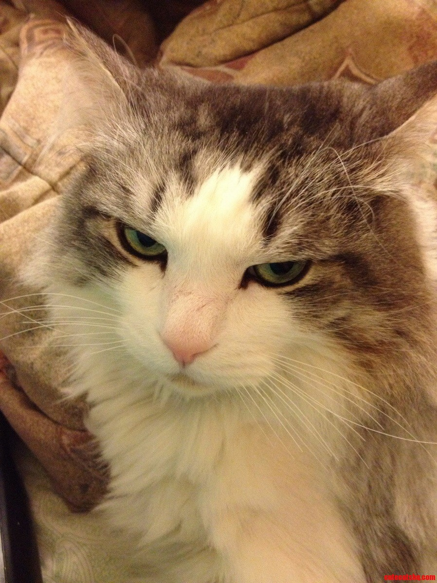 Kody Cat Is Not Amused.