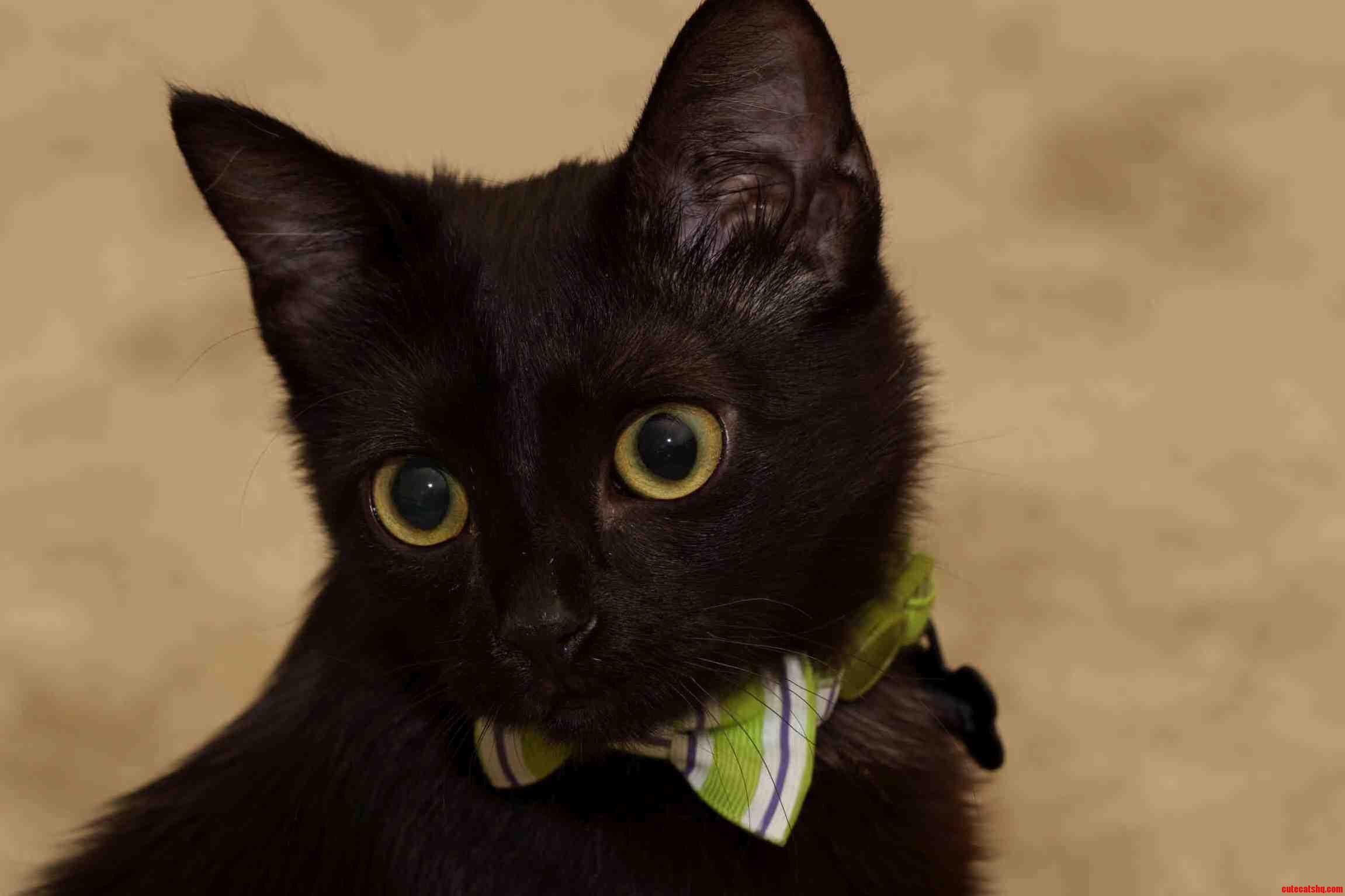 Little Bones On Black Cat Friday
