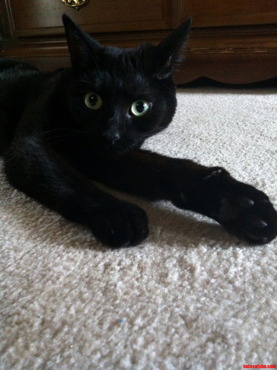 Lounging Around On Black Cat Friday