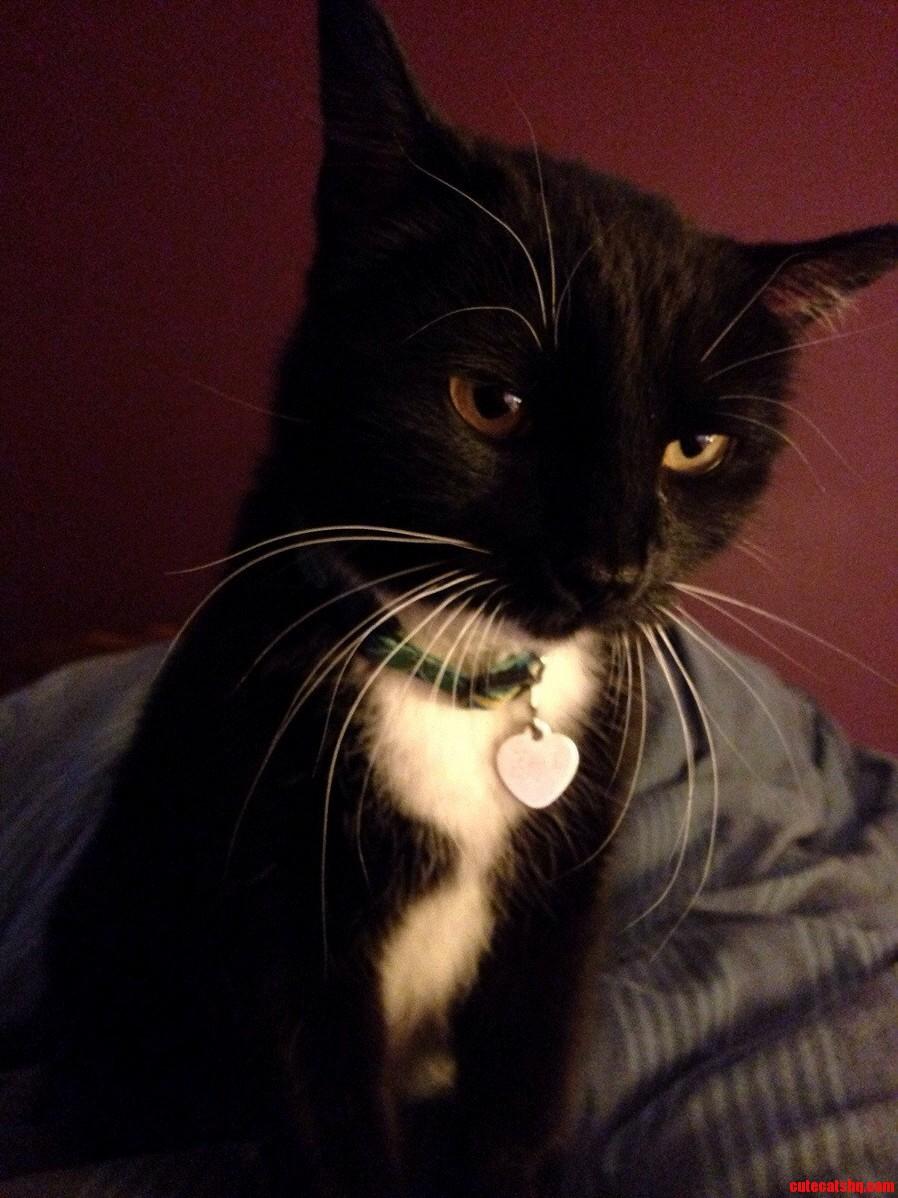 Marceline The Kitty Cat Queen