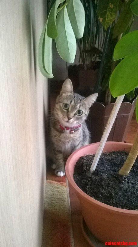 Meet Kitty