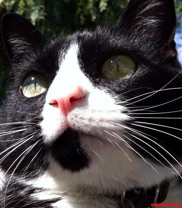 Meet Louie.