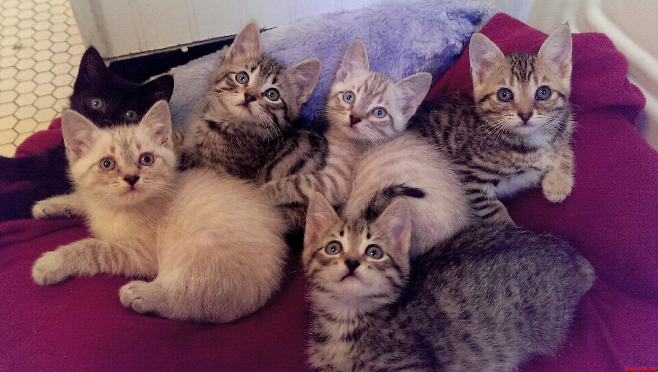 Meet My Sweet Foster Kittens. I Cant Believe I Got Them All To Be Still And Look At The Camera.