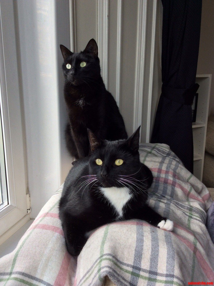 Meet Oscar And Vivienne