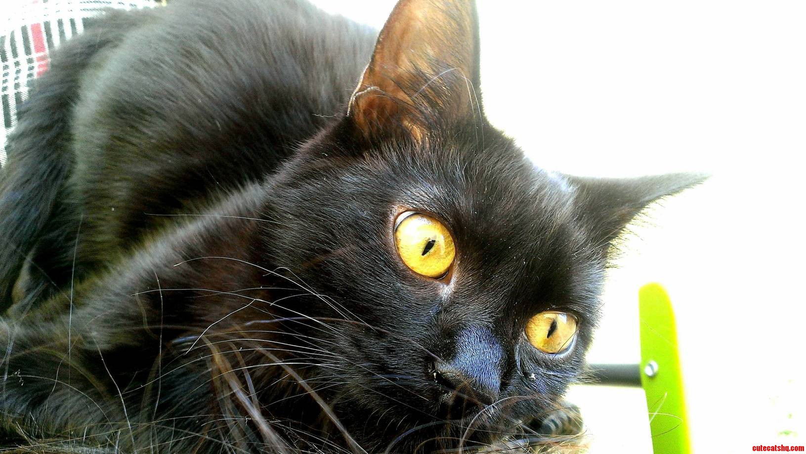 Mowgli Was Wondering If He Could Join Black Cat Friday