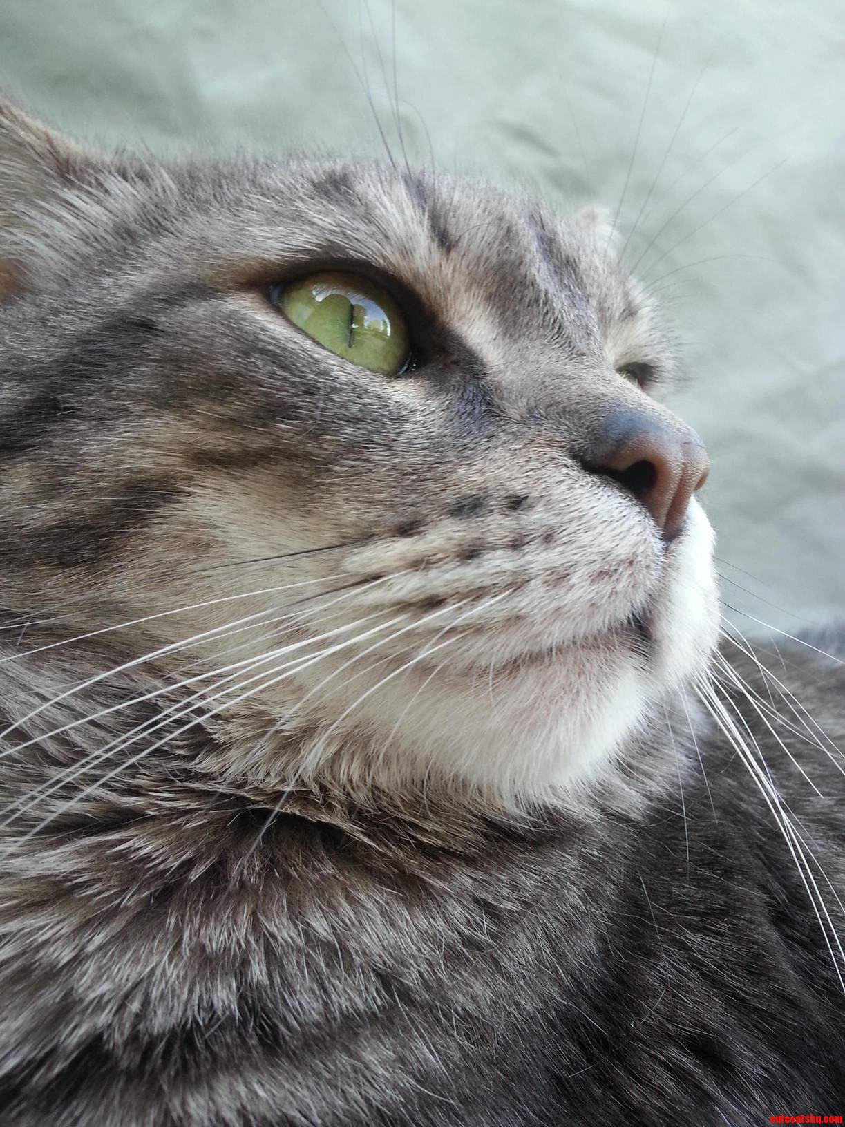 My Cat Looks As If Hes Pondering A Complicated Theory…