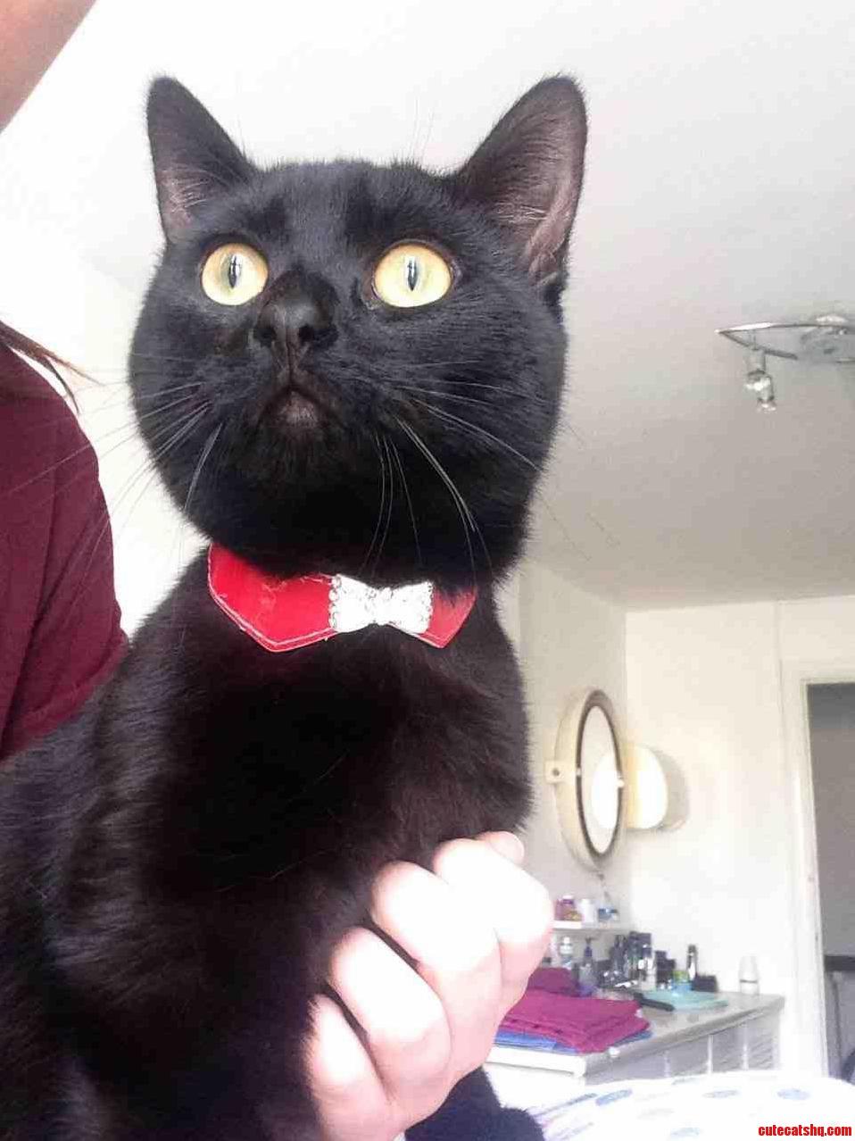 My Cat Toby Wan Kenobi