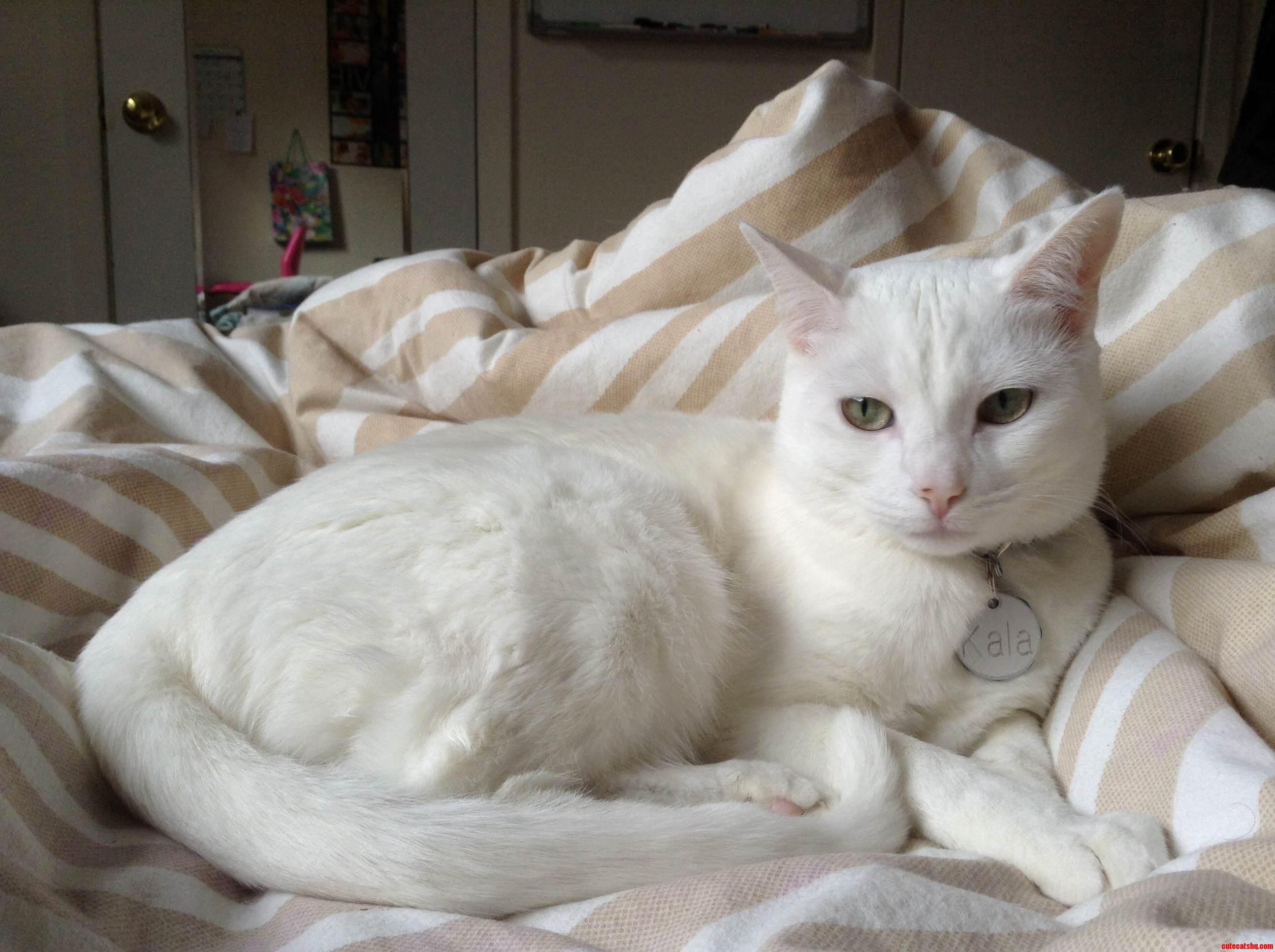 My Darling Kitten Kala. She Always Blends In.