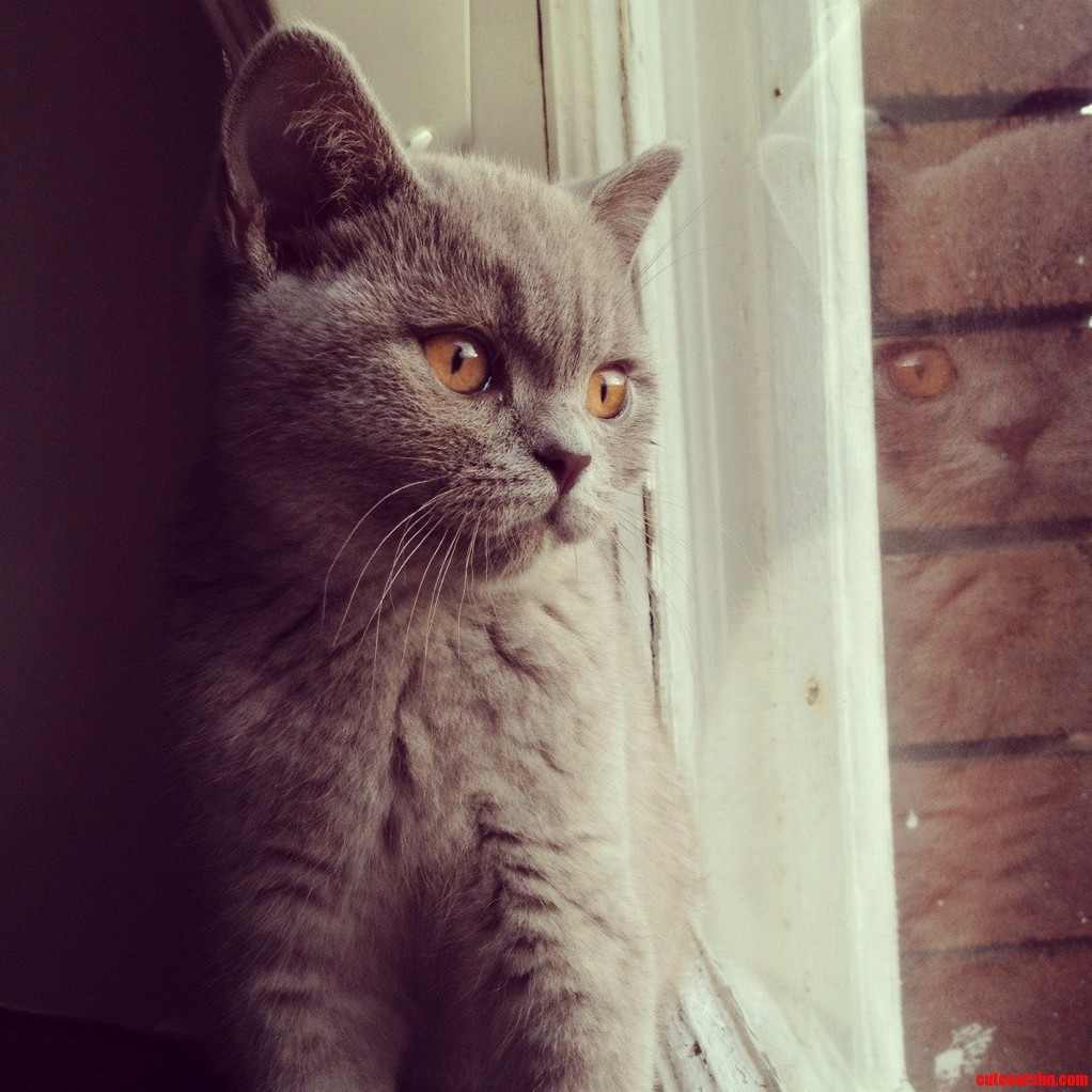 My First Born Son Winston – He Likes To Watch The World Go By.