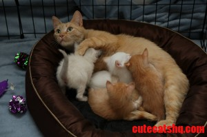 My First Foster Assignment Mama And Her Four Babies