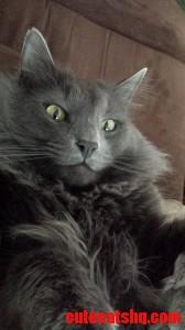 My Fluffy Little Friend Bubba.