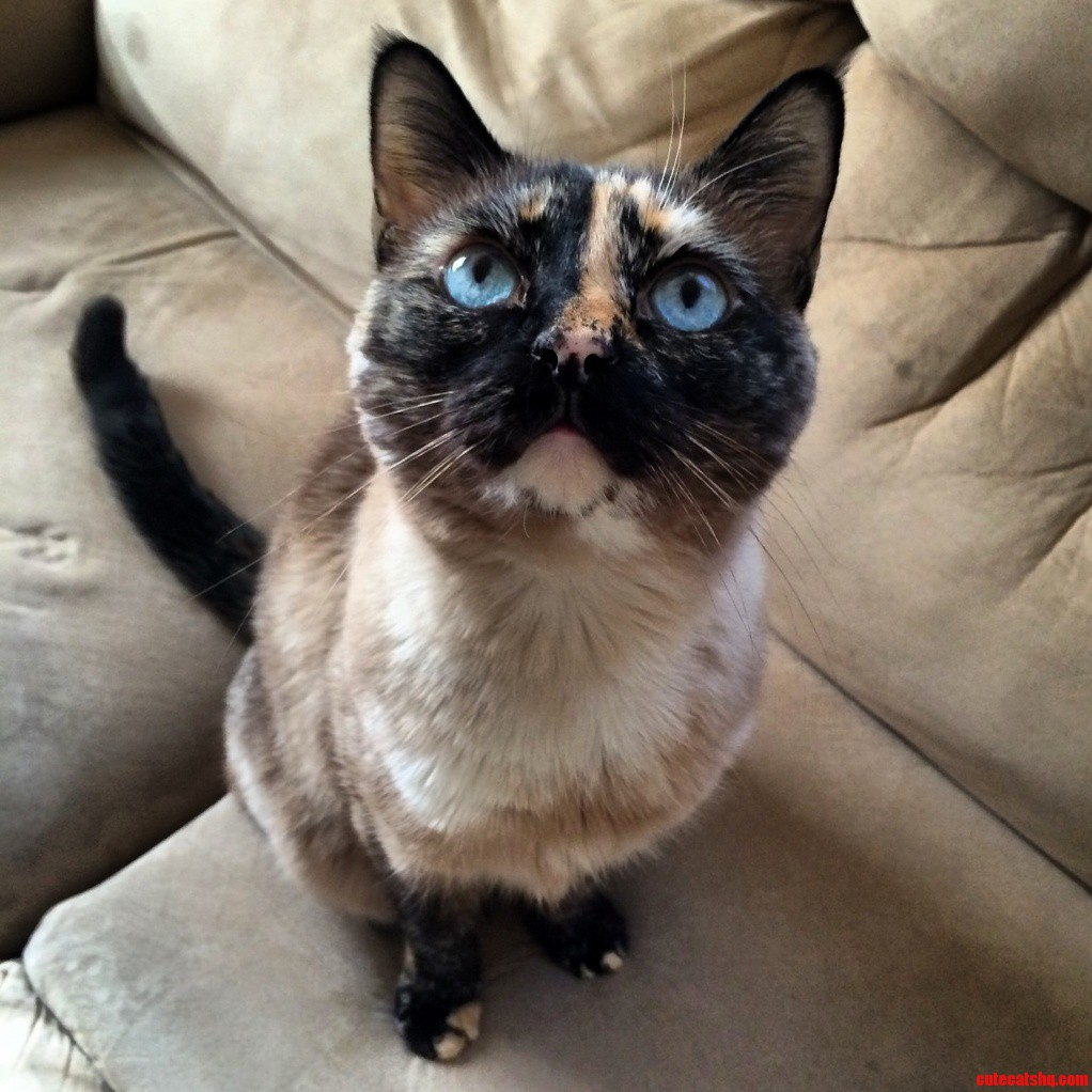 My Roommates Gorgeous Kitty Miss Zara