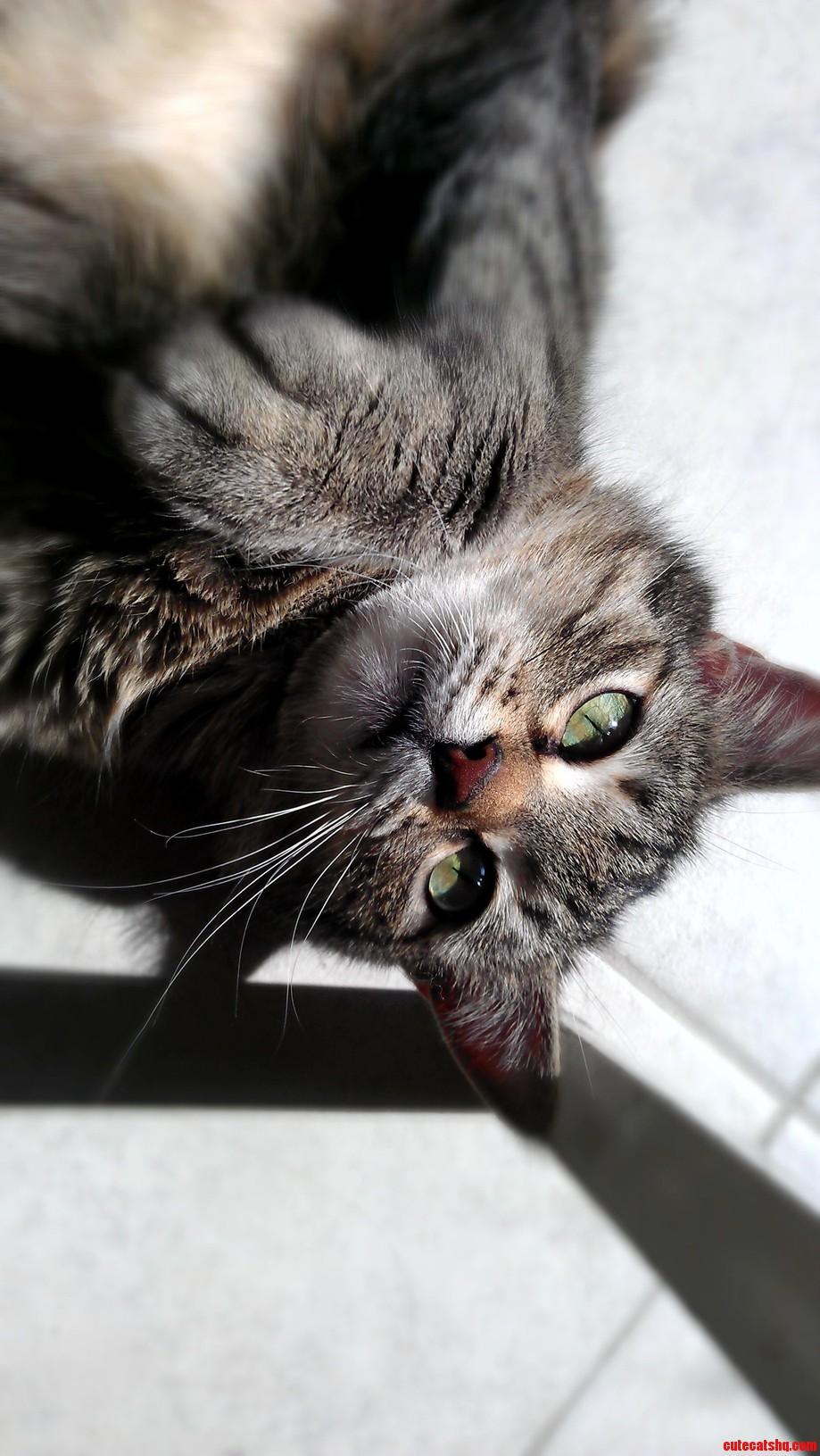 My Totally Plain Pretty Tabby Cat