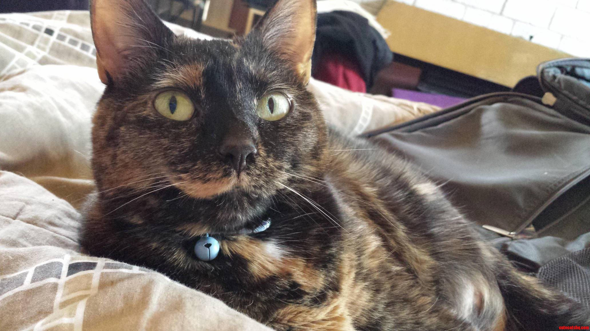 Myrtle Loves Tortie Thursday