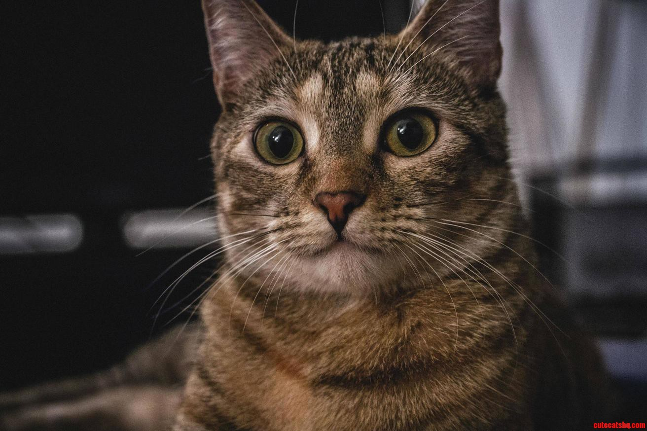 Portrait Of My Cat Taco