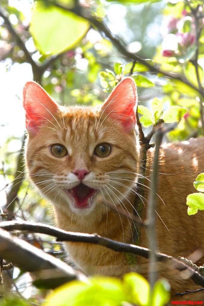 Smiley Cat In Tree