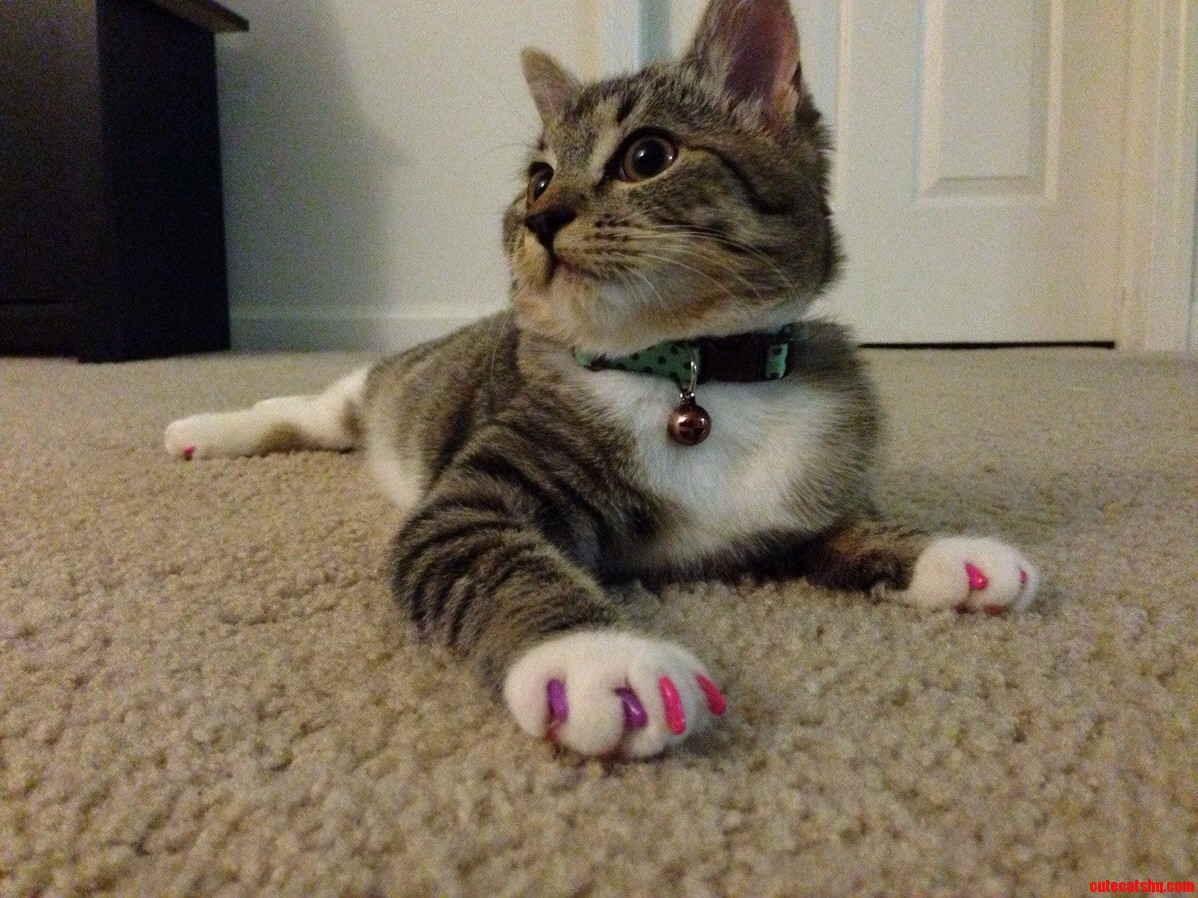cost for declawing a kitten