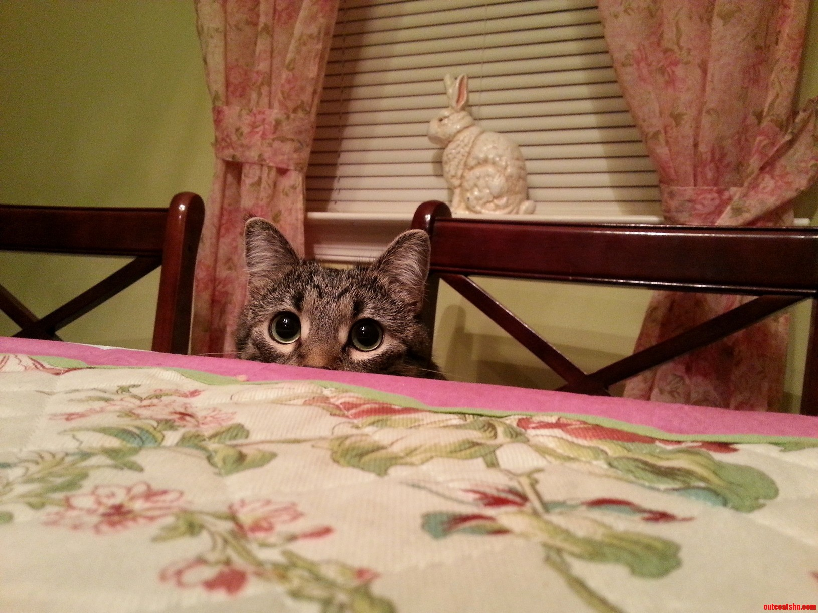 Someone Wanted To Eat Dinner With Us Today…