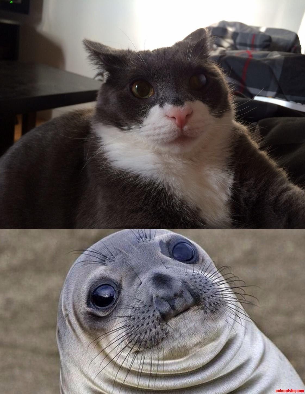 The Similarity…