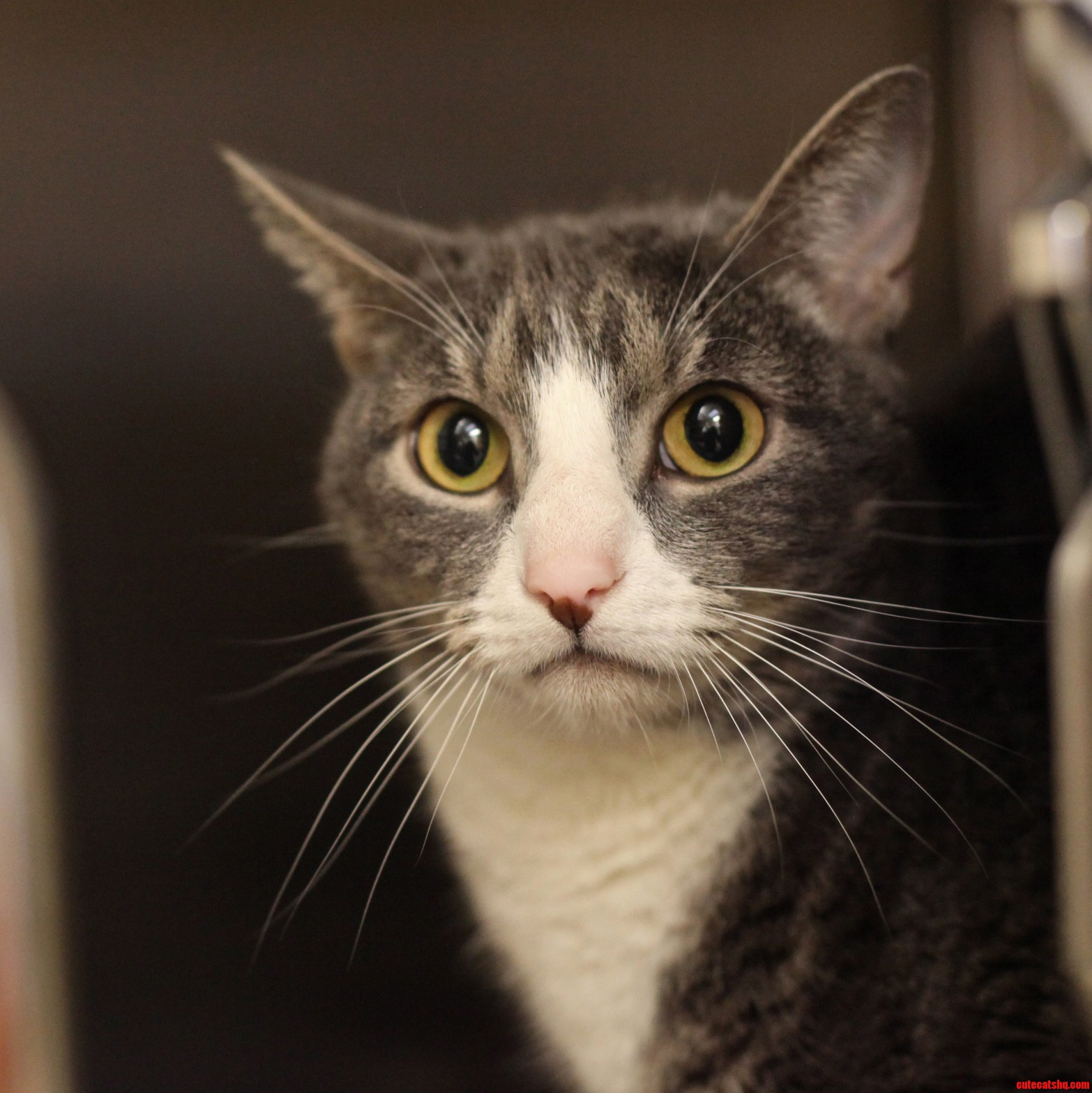 This Is Lincoln. He Is Super Expressive And He Is Up For Adoption