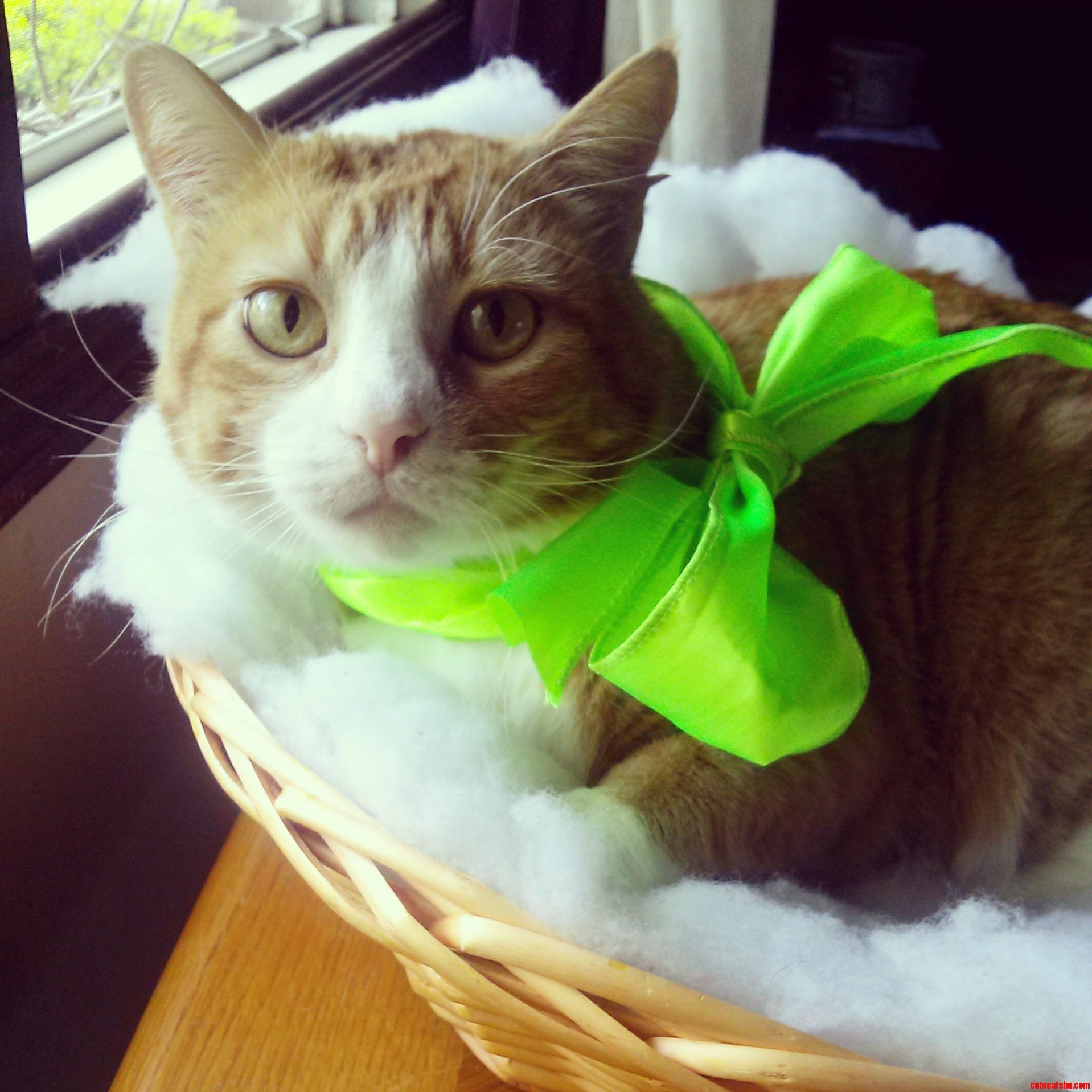 Who Needs An Easter Bunny When You Have An Easter Kitty