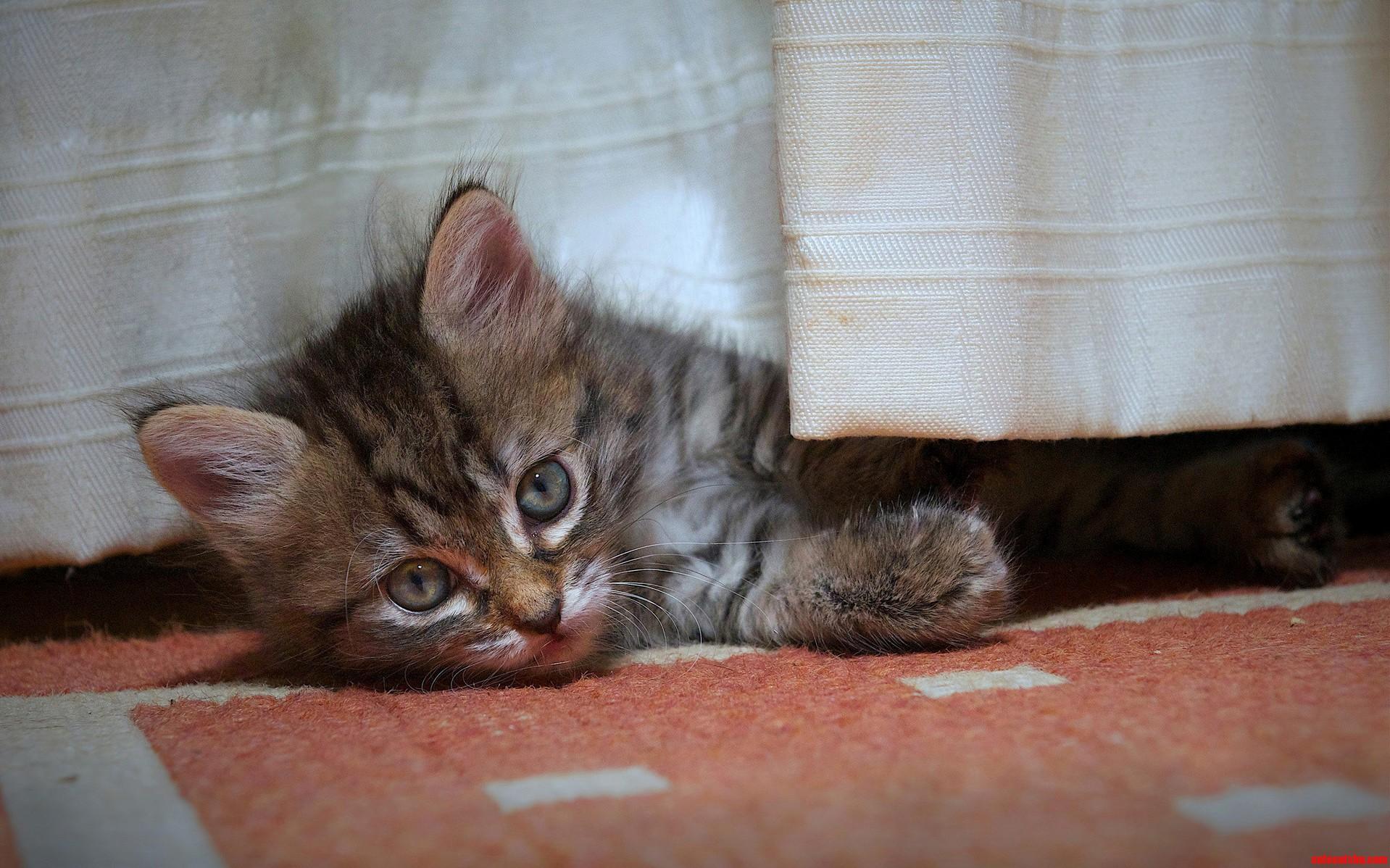 Beautiful Cat-Eyes