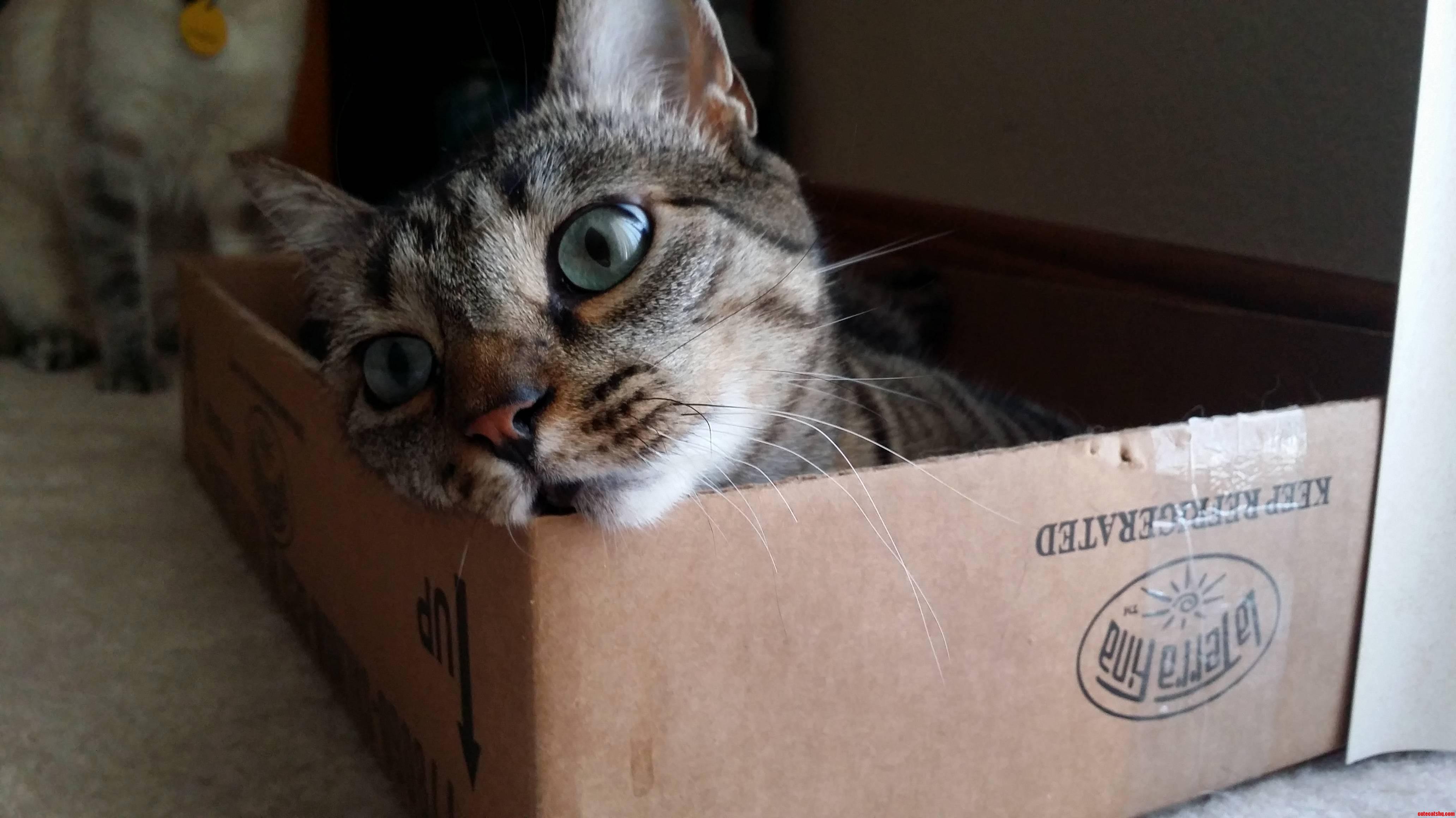 Box Are Drug