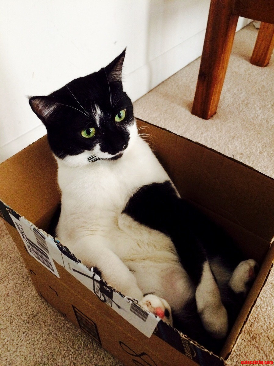 Derpy Cats Now Available Through Amazon Prime