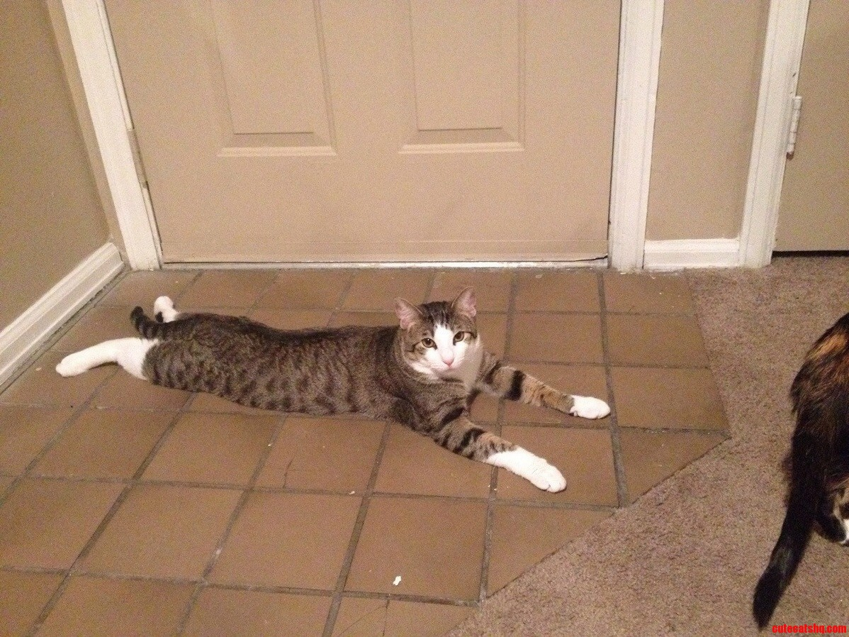 How Carl Keeps Cool On The Tile.