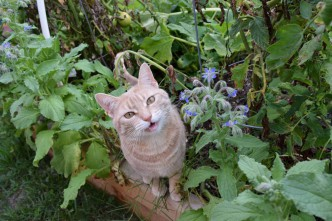 Milly Loves To Explore The Garden.
