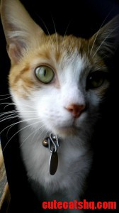 My Boyfriend Says My Cats Eyes Look Alien. What Do You Think