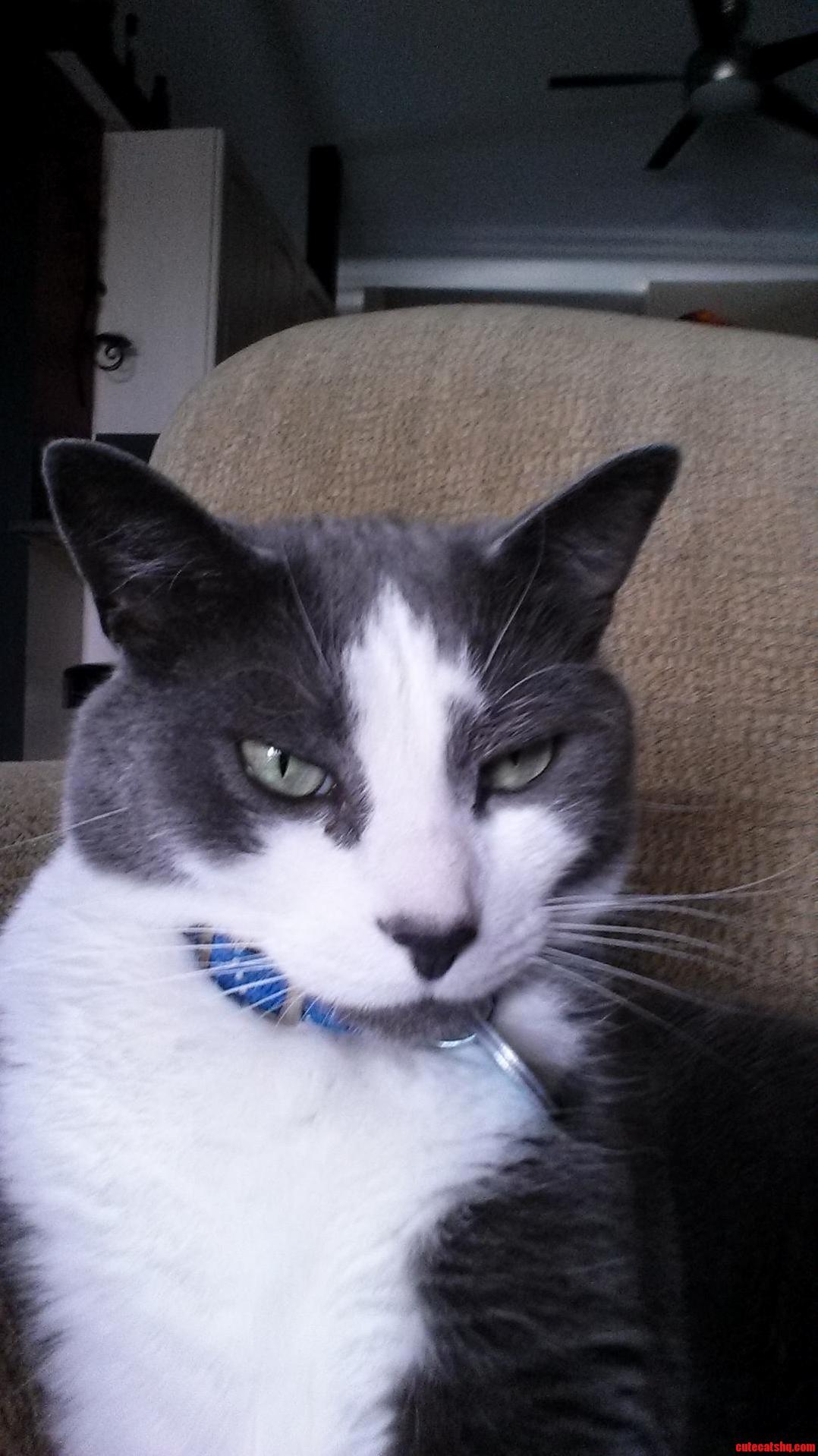 My Cat Isnt Too Impressed.