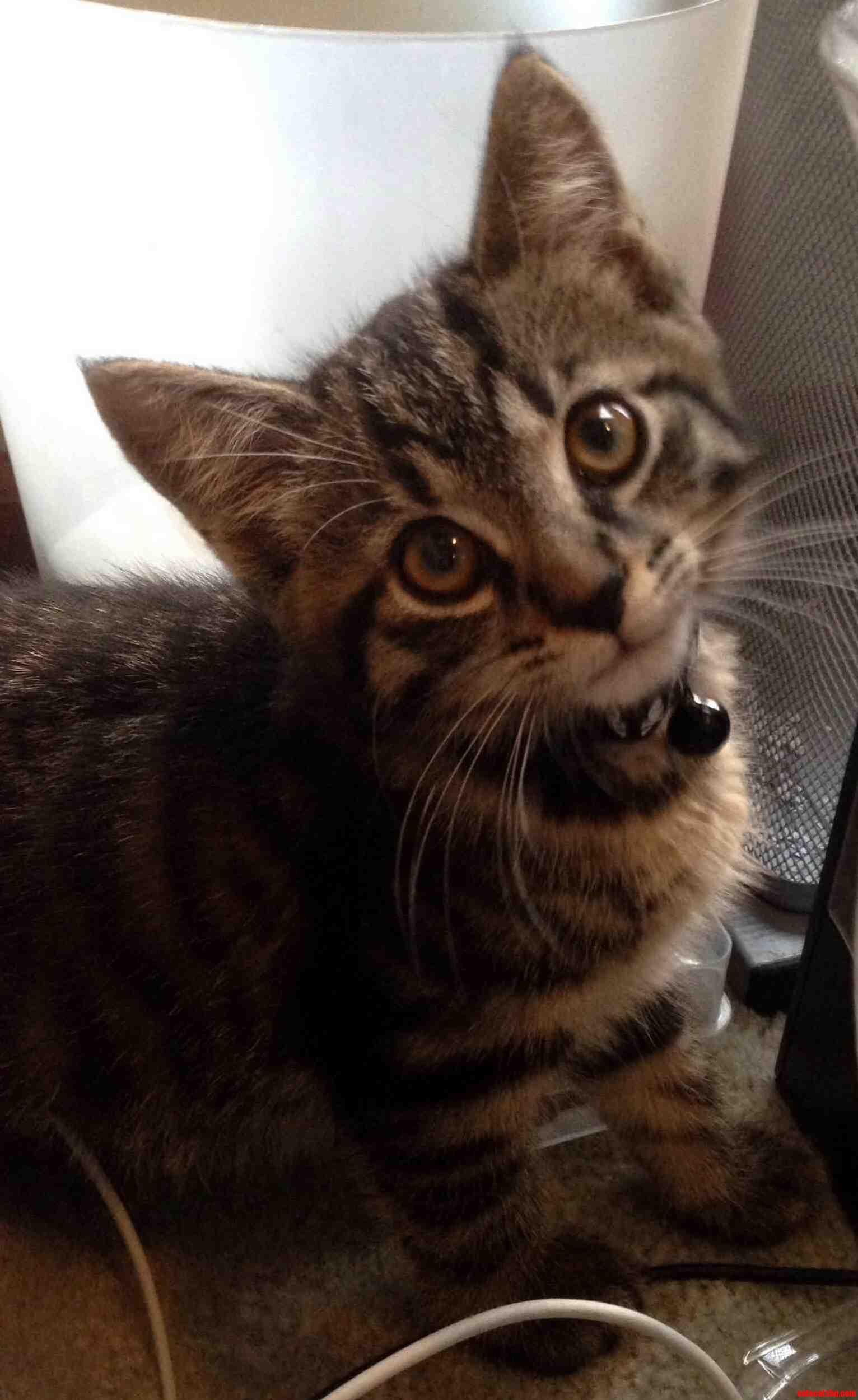 My Friends First Kitten Chief