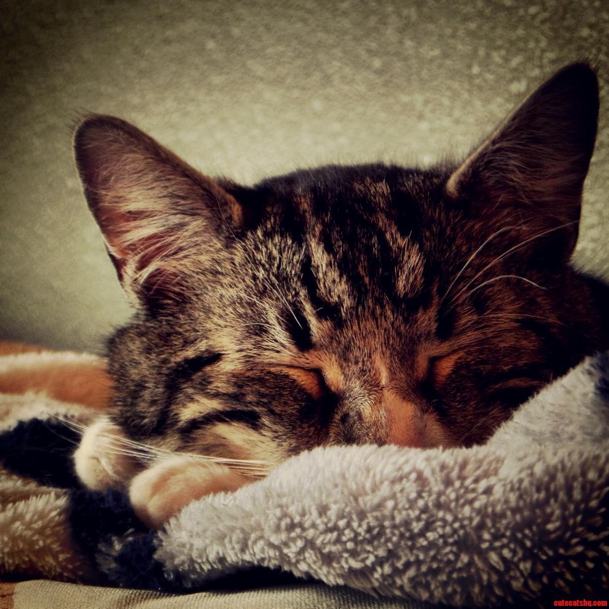 My Happy Kitty Sleepy Kitty…..