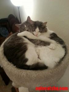 My Two Kitties Cuddling In Their Cat Tower.