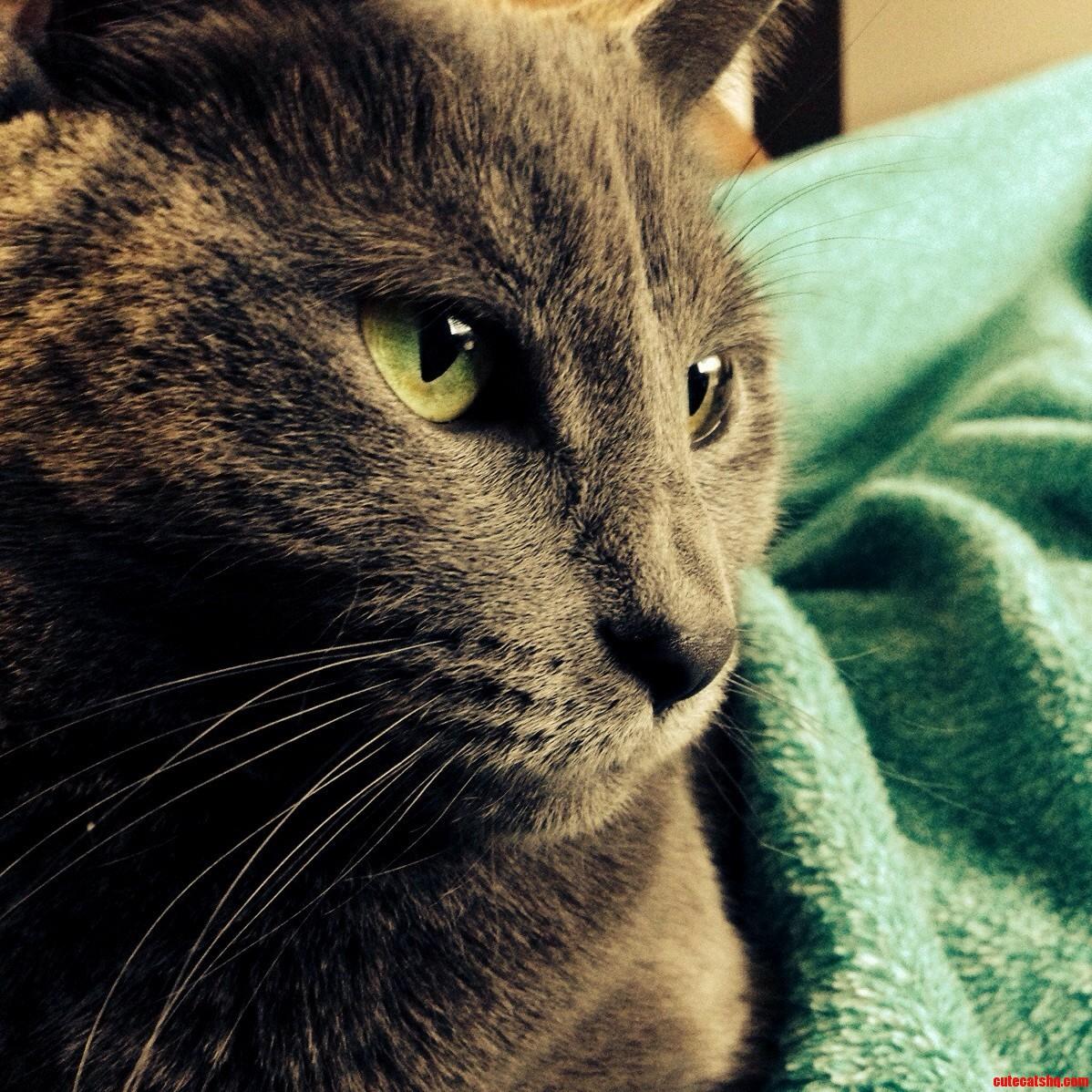My lovely Cat.