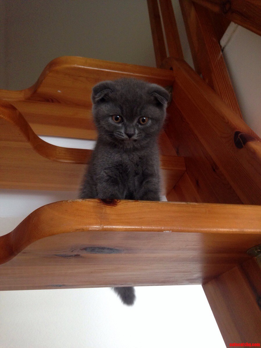 Norbert And The Stairs.