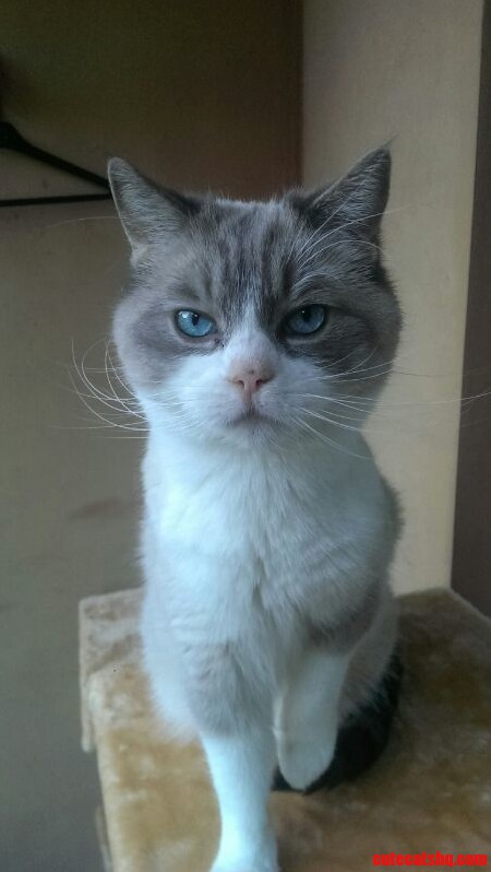 Not The Happiest Cat In The World…