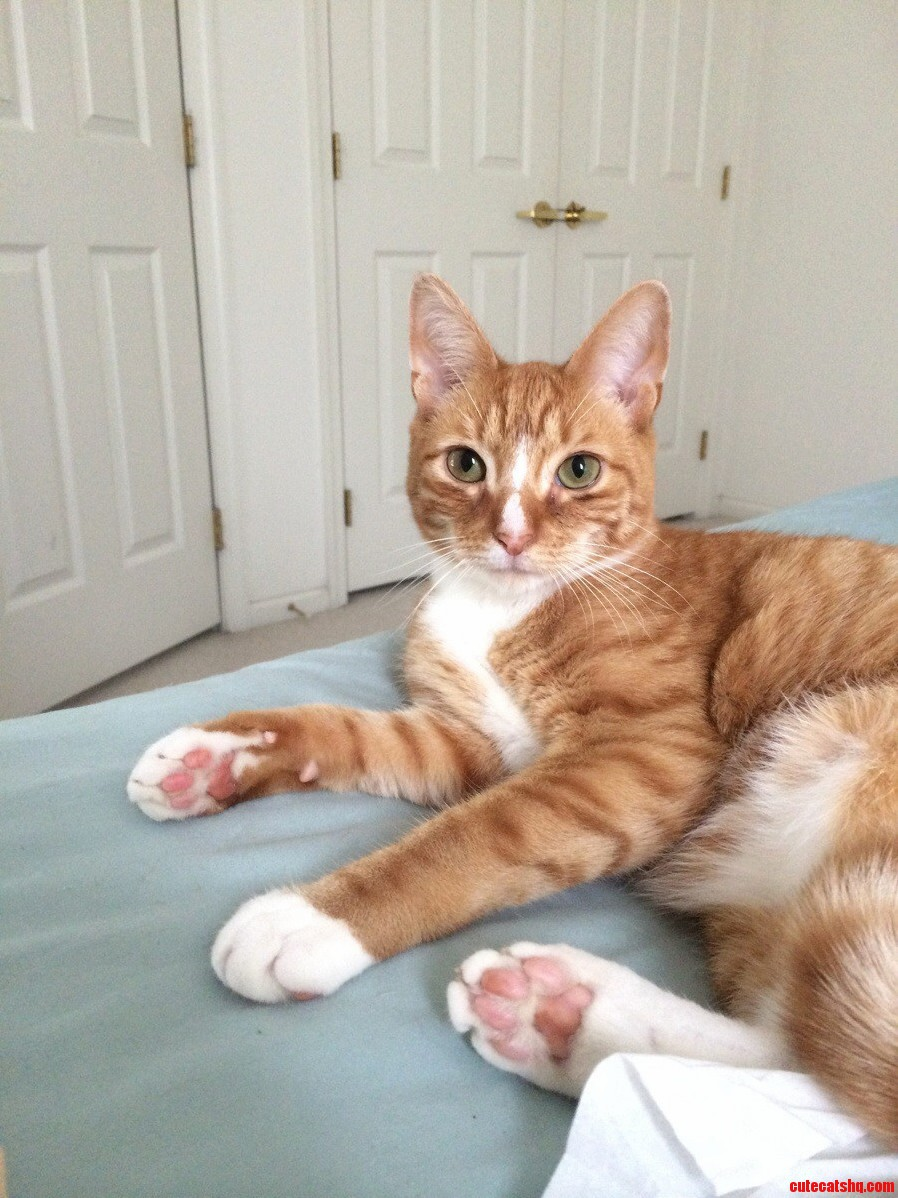 Photogenic Kitty