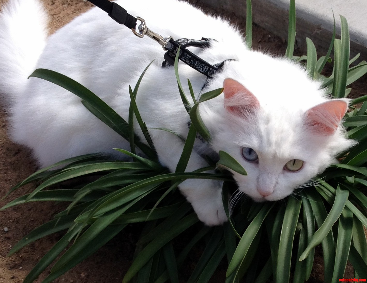 Ripley Loves Her Plants. D