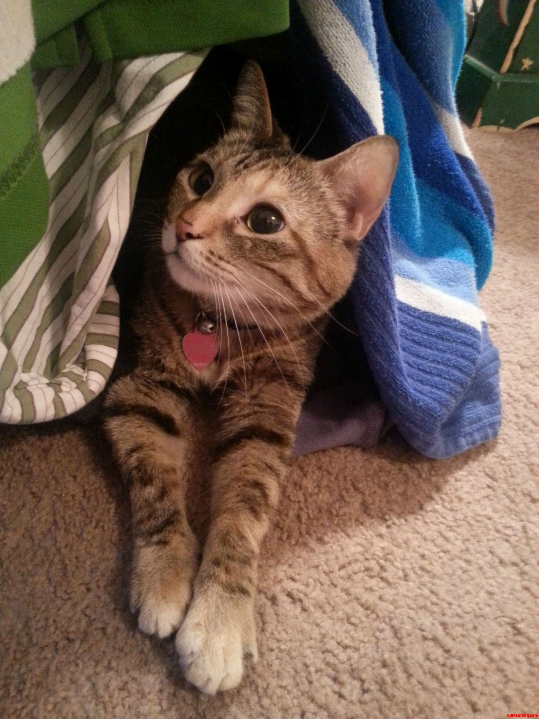 Someone Made Herself A Cave Out Of The Overflow Of Our Dirty Laundry
