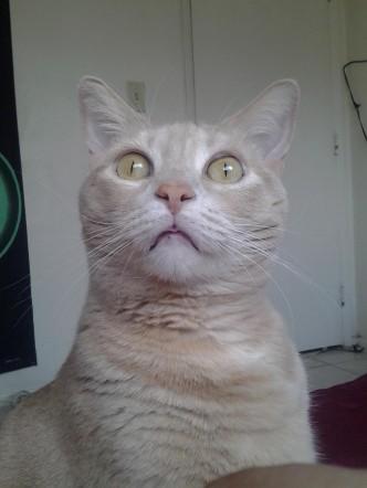 Sudden Clarity Cat