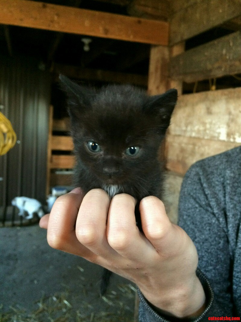 The Runt Of The Litter