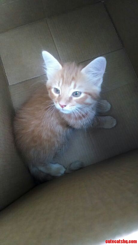 This Will Be My First Cat Ever. His Name Is Thor