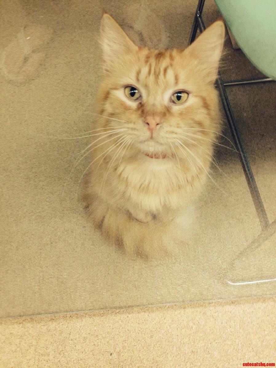 Torso Cat Is Just A Torso.