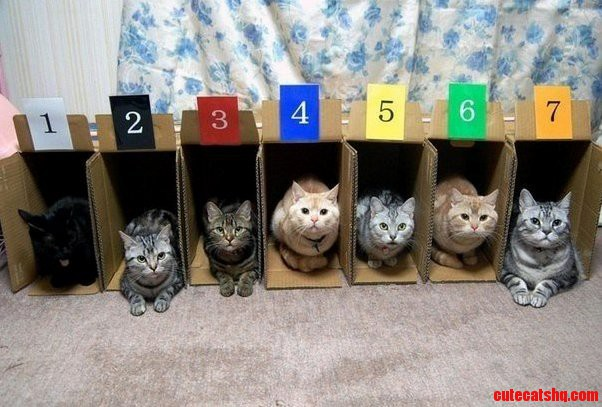 Why Cat Racing Is So Awesome.