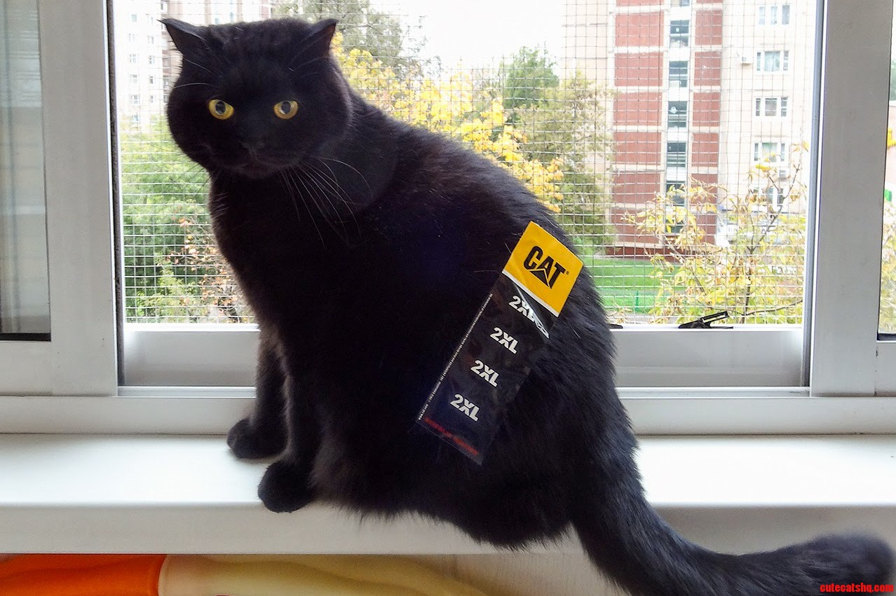 2Xl Cat. Measured And Certified By The Chamber Of Weights And Measures In Paris.