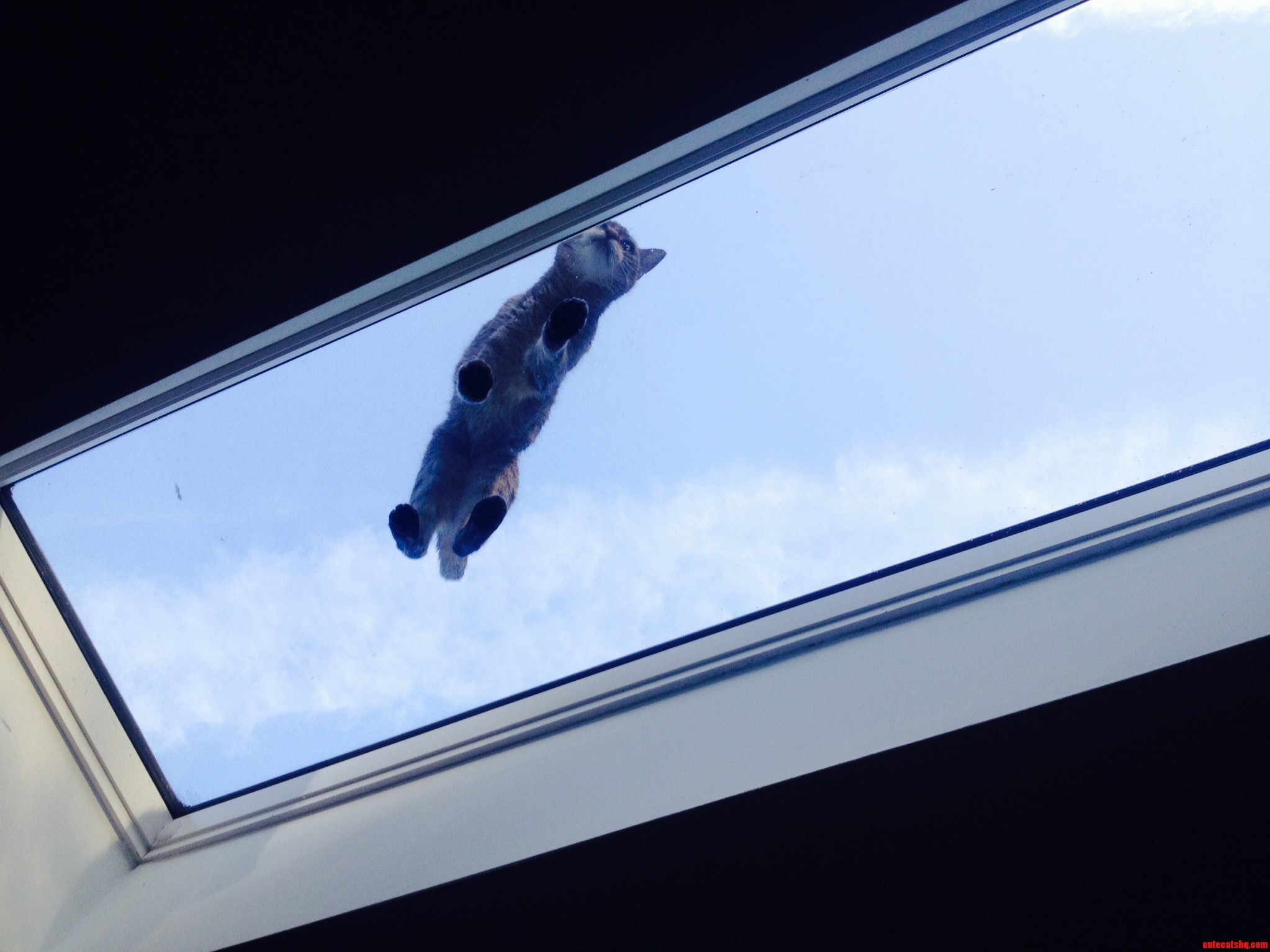 A Kitten In The Sky