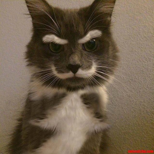 A Magnificently Mustachioed Cat